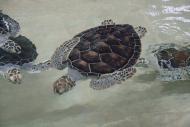 Tortugranja Turtle Farm