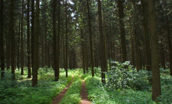 Forest near Schloss Schallaburg