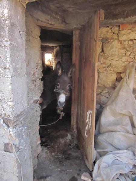 Donkey - Lycian Way