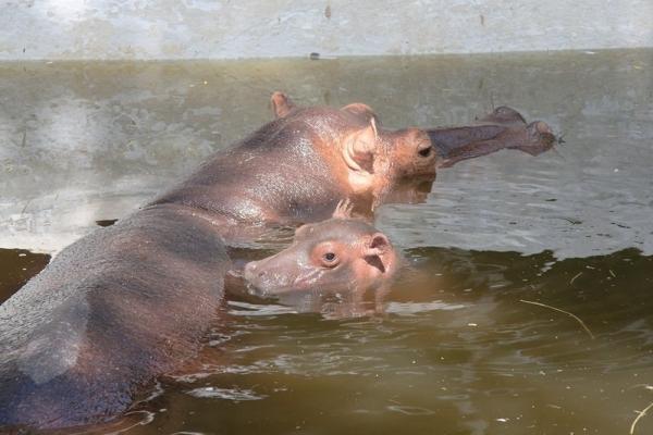 Parque del Centenario (Merida's Zoo)