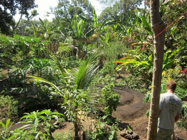 Organic El Salvador