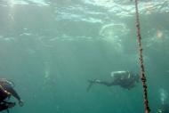 Utila - Underwater