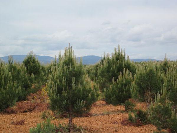 Camino scenery