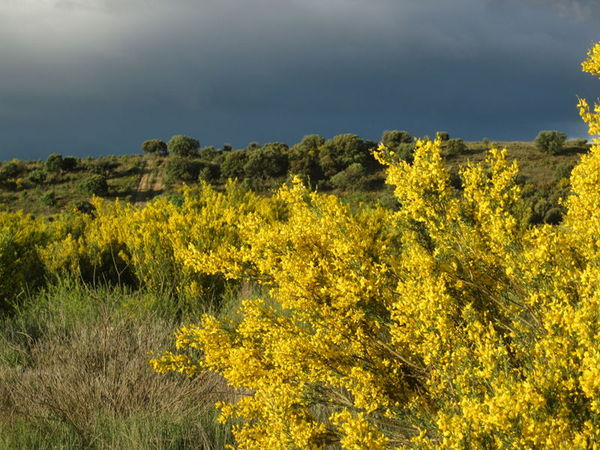 Black clouds and yellow bushes