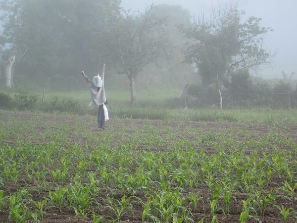 Scarecrow in the morning fog