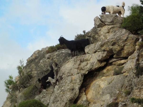 Mayehm and the Mountain Goats - Lycian Way