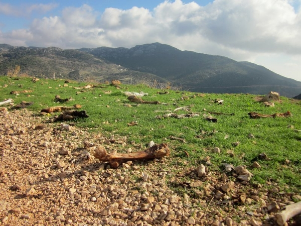 Cattle Grave Yard - Lycian Way
